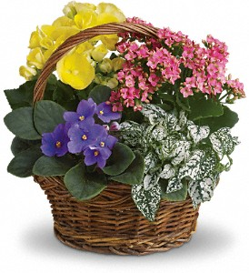 Blooming Spring Basket Mixed Plant Basket