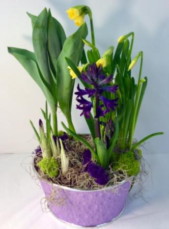 Blooming Spring Bulbs