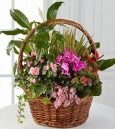 Blossom Basket Thomaston florist & Greenhouse