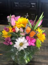 Blossoms & Butterflies