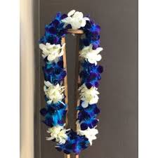 BLUE AND WHITE DOUBLE ORCHID LEI GRADUATION LEI