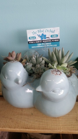 Blue Bird Succulents Planter-Succulents