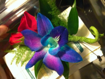 Blue Bom Orchid Boutonniere