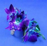 Blue Bom Orchid  Wristlet Corsage