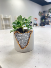 Blue Calcite Shooter Planter