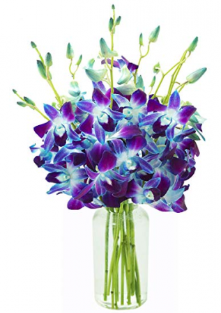 Blue Dendrobium Orchids Cut Orchid in a vase