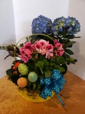 Blue hydrangea Easter basket Plants
