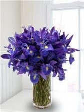 Blue Iris in a tall vase