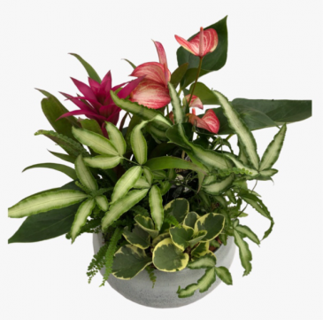 """White wash Anthurium planter 17 """" Tall x 11"""" wide, luscious, tropical Extra Large planter"""