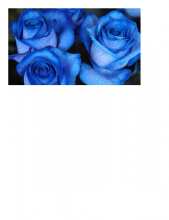 Blue Moon 12 Blue Roses in Vase