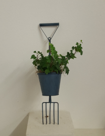 Blue pitch fork  indoor green plants