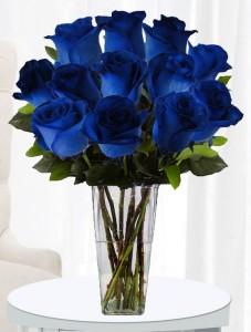 BLUE ROSES EF70