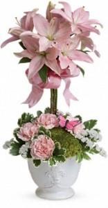 Blushing Lilies