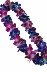 BOMBAY/BLUE DOUBLE ORCHID LEI GRADUATION LEI