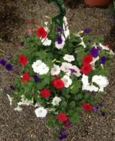 Bombshell blooms Hanging outdoor planter
