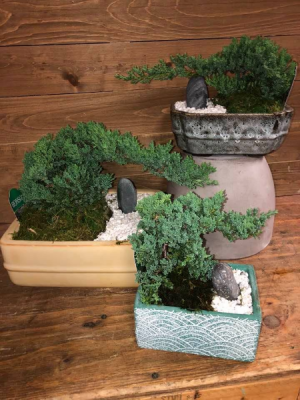 Bonsai Tree in Vernon, NJ | HIGHLAND FLOWERS