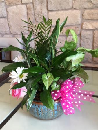 BOTANICAL GARDEN PLANTS AND FRESH FLOWERS
