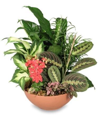 Botanical Gardens Indoor Plants