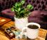 Botanicals and Brews