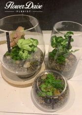 Botaniculture Terrariums Plants in Glass Vase