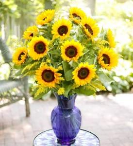 Bounty of Sunflowers 1 Dozen Sunflowers in Lakeland, FL | MILDRED'S FLORIST