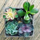 Boutique Succulent Garden Potted Plant