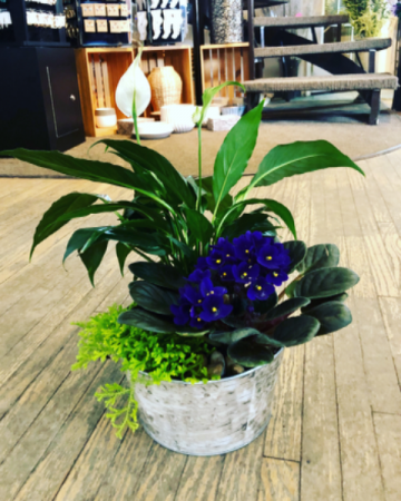 Boutique Violet Garden Potted Plant