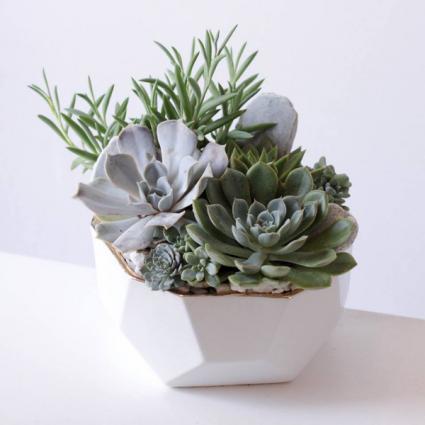Bowl of Succulents