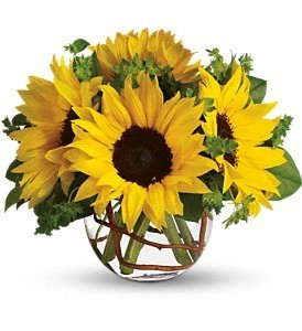 Bowl of Sunflowers