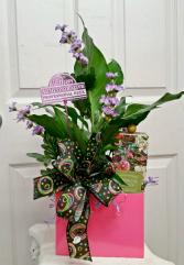 Box of Appreciation Botanical Everyday
