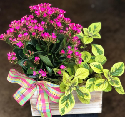 Box of Blooms- assorted plants Plants