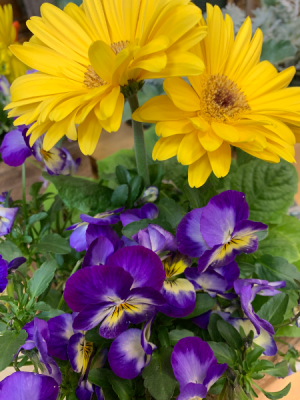 Box of Happiness Planter Box in Northport, NY | Hengstenberg's Florist
