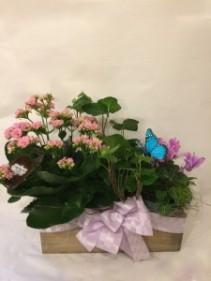 Box of Love plant combination