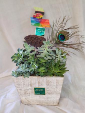 Box of Succulents Green Plant