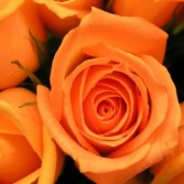 Dozen Box: Orange Roses Rose