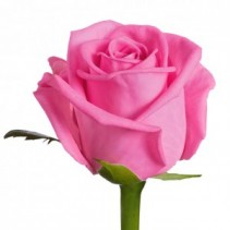 Box: Premium Pink Rose
