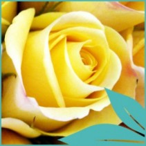 Box: Premium Yellow Rose