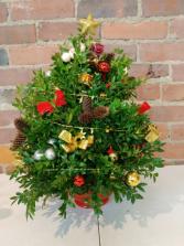 Boxwood 2 Christmas
