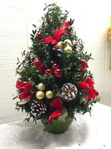 Boxwood Christmas Tree Boxwood Tree in Fairfield, CT - Blossoms at ...