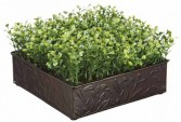 Boxwood in Square Dish-SILK BOTANICAL