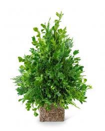 Boxwood Simplicity Tree Flower Arrangement