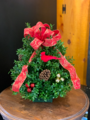 Boxwood Tabletop Tree Christmas  in Newport, VT | Kingdom Floral Designs