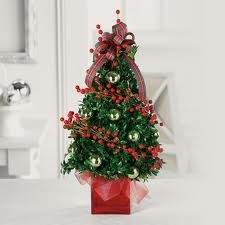Boxwood Tree  in Bedford, NH | DIXIELAND FLORIST & GIFT SHOP INC.