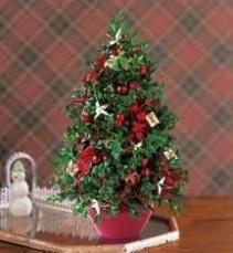 Boxwood Tree  Boxwood Tree