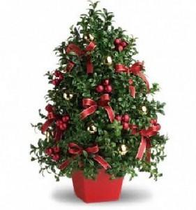 Boxwood Tree Christmas Bouquet