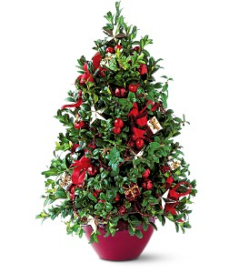 Boxwood Tree Christmas-Holiday