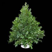 Boxwood Tree Hand Made