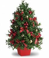 Boxwood Tree Holiday Centerpiece