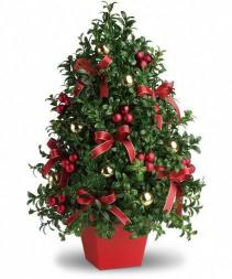 Boxwood Tree Holiday Centerpiece