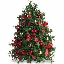 Boxwood Tree Non- fragrance Table top tree